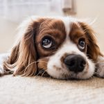 3 reasons why dog insurance is important to have
